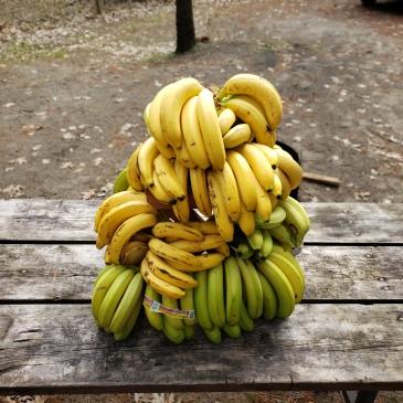 bananas - BeHumanNotaZombie.com